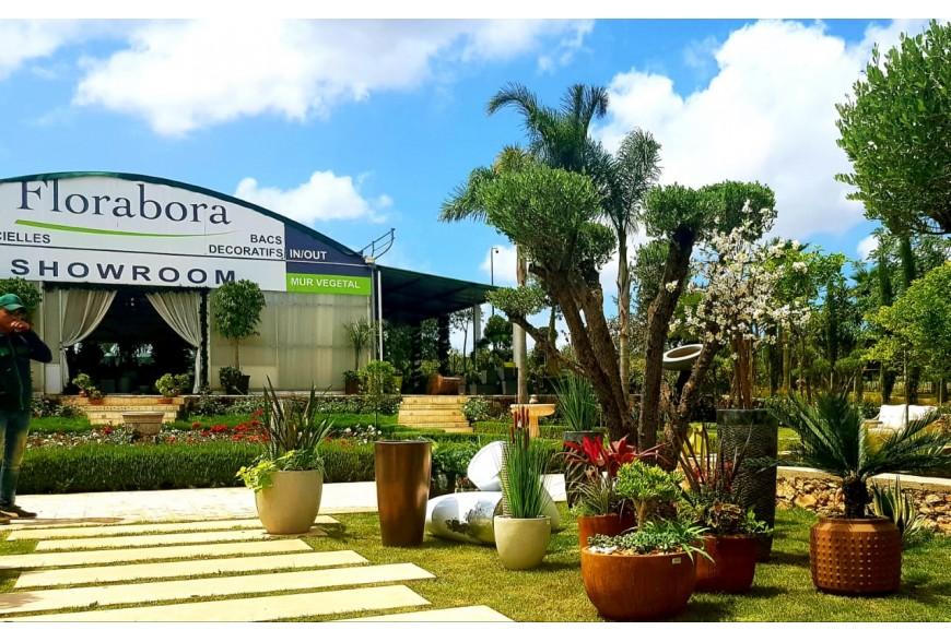 Nouvelle collection - Arrivage pots et plantes
