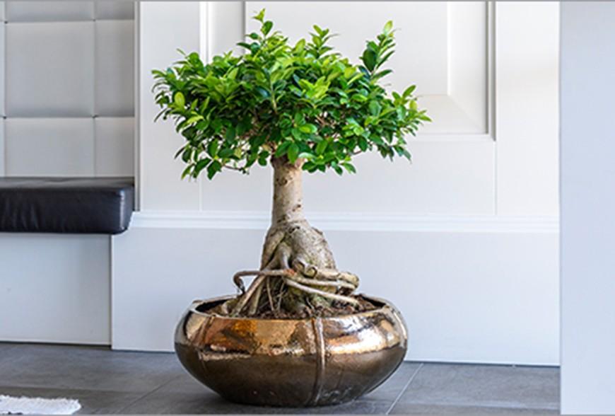 Pots et bacs décoratifs